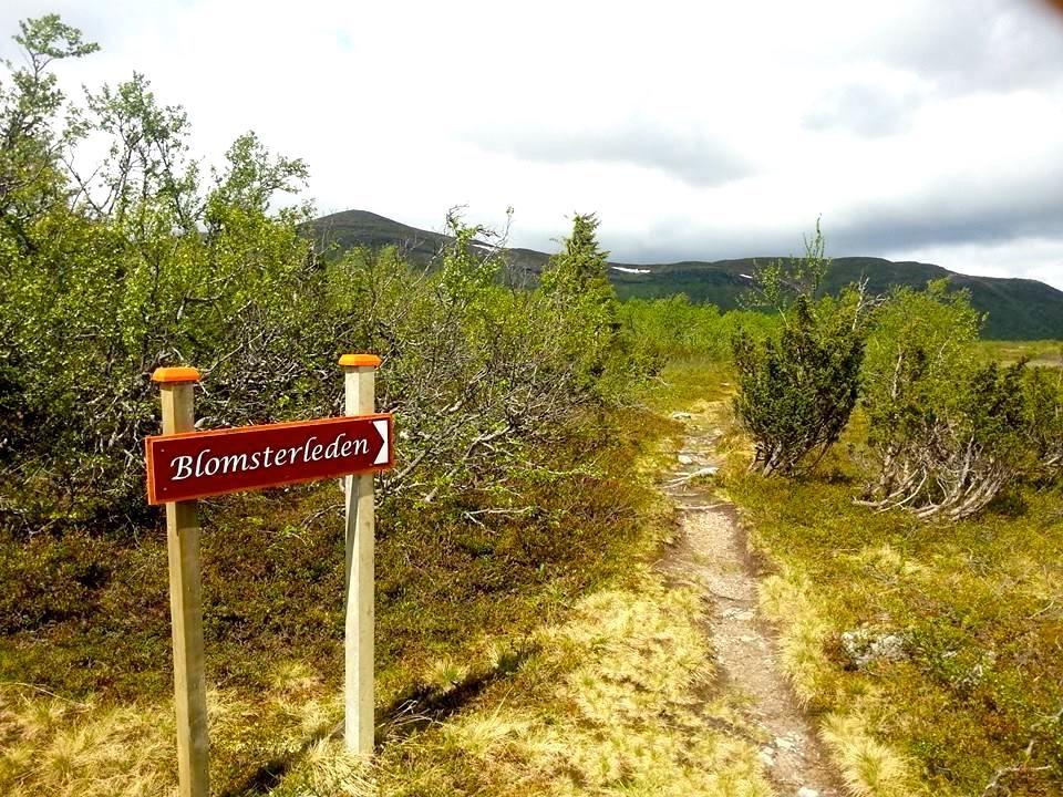 Markerad och skyltad led längs Blomsterleden till Blomsterfjället Ansätten. Foto © Föreningen Blomsterleden.