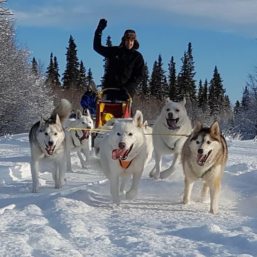 Lyckliga hundar på slädhundstur i Ansättfjällen. Foto © Jet Sleddogs