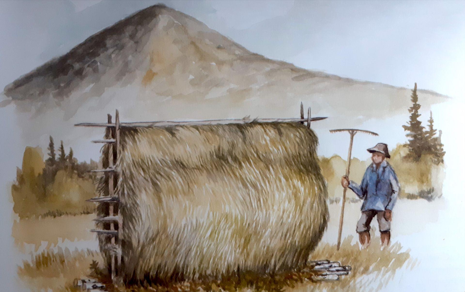 Starrgolv. Illustration av Göran Boström.