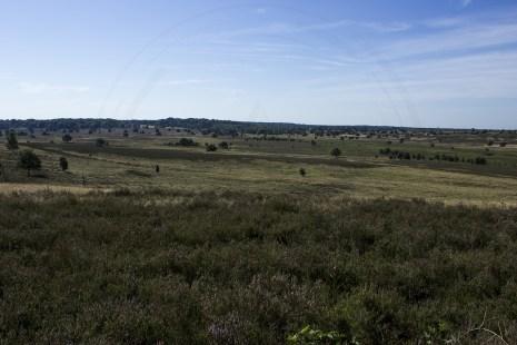 Lüneburger Heide (15)