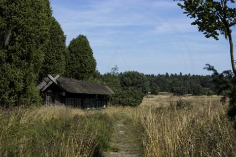 Lüneburger Heide (17)