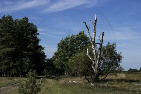 Lüneburger Heide (2)