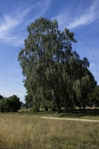 Lüneburger Heide (6)