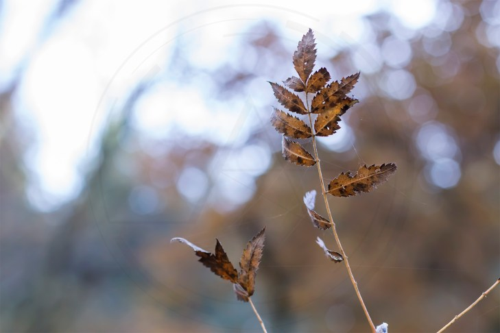 Herbstliches Petergensfeld (13)