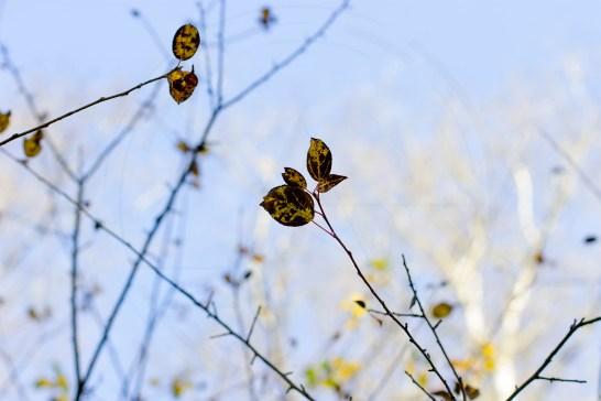 Herbstliches Petergensfeld (14)