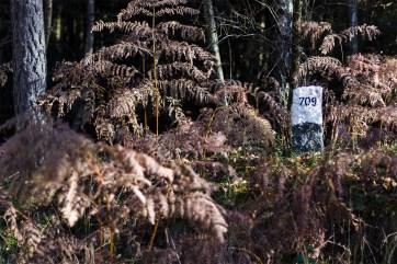 Herbstliches Petergensfeld (18)