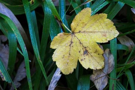 Herbstliches Petergensfeld (3)