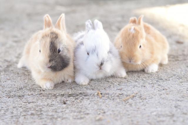 ウサギを飼う上で、後で後悔しないために知っておくべきこと。