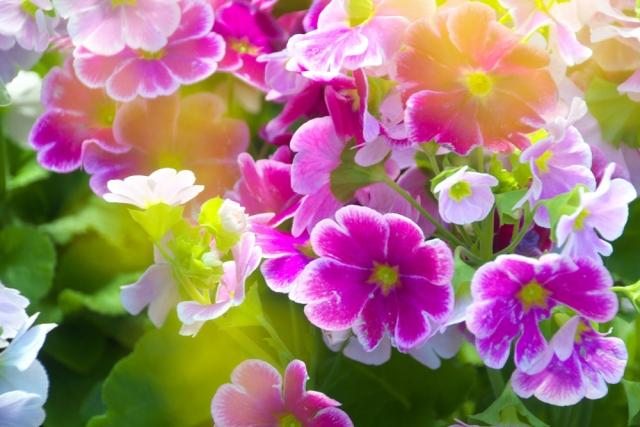 室内で花を種から育てる方法!