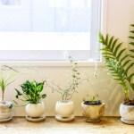 室内で植物や花を育てよう!意外なメリットとオススメ植物