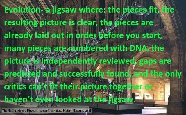 Evolution- fits like a numbered jigsaw
