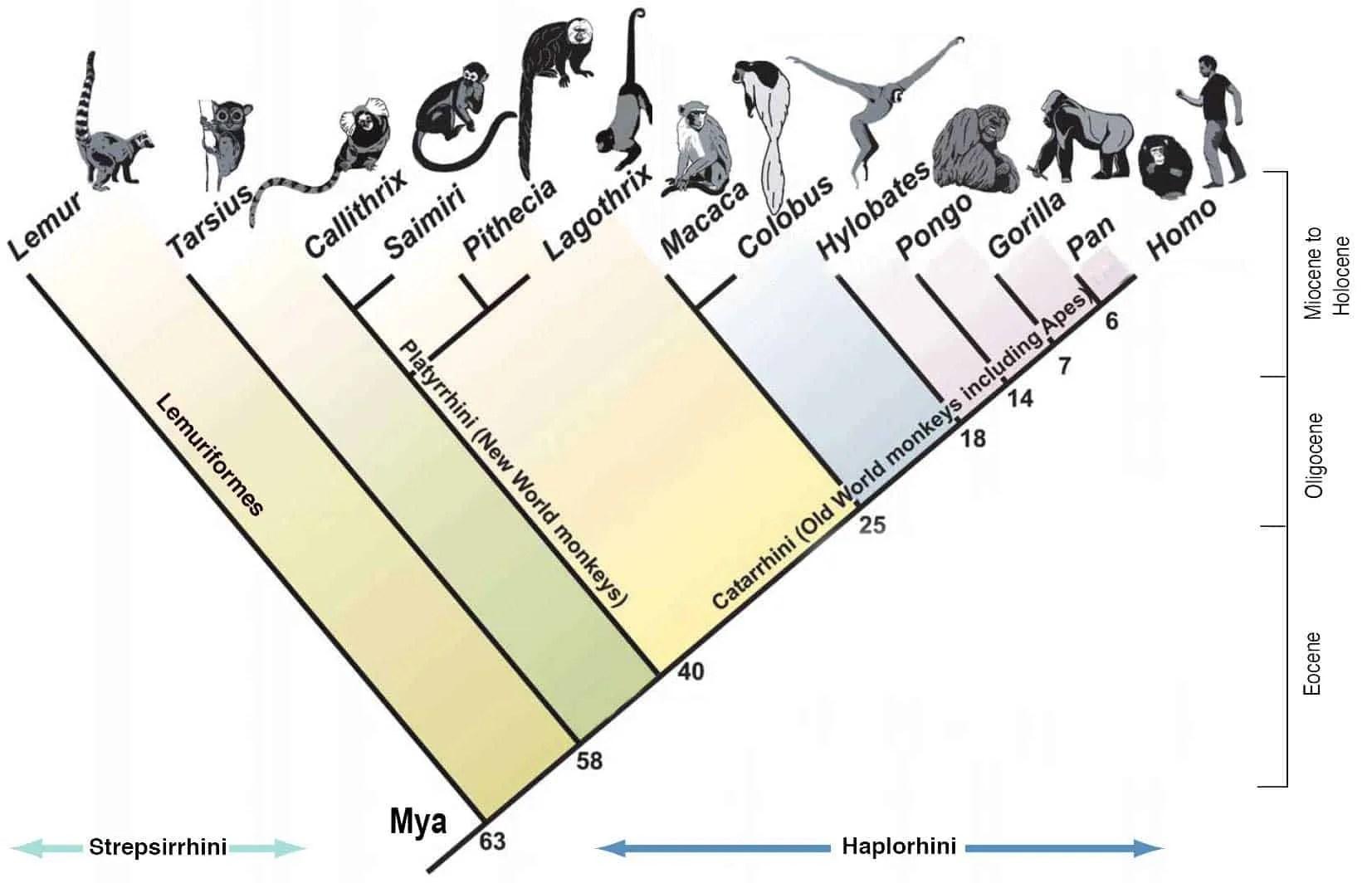 Tag Evolution