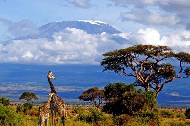 kilimanjaro-giraffe-1