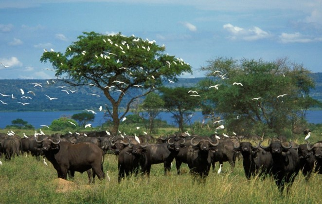 Murchison Park-Uganda1