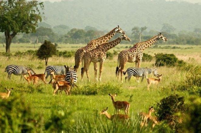 Wildlife-Uganda