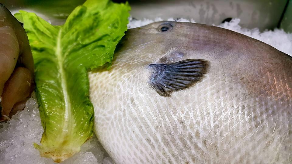 Ekici Restaurant – 0242 2484142 antalya kaleiçi yat limanı mekanlar restaurant bar balık evi (15)