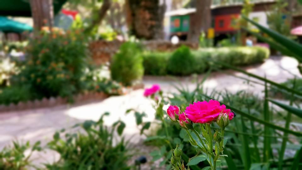 Paşa Kır Bahçesi Çakirlar – 0242 4394747 – Antalya Van Kahvaltısı Çakırlar Kahvaltı Yerleri (1)
