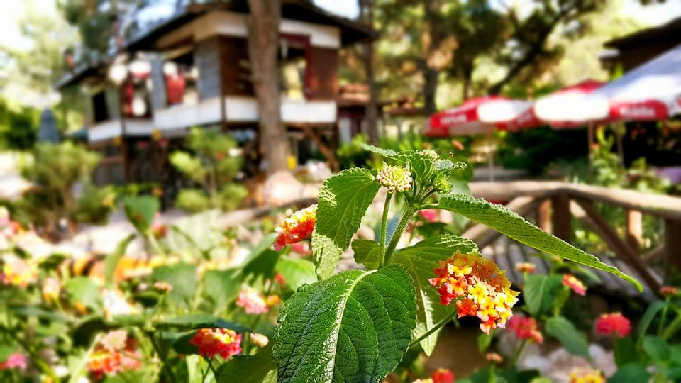 Antalya Köy Kahvaltısı – 0242 4394747 – Çakırlar Gzöleme Bazlama Paşa Kır Bahçesi Çakirlar (17)