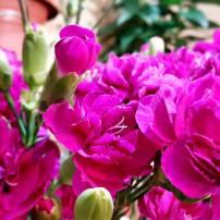 antalya çiçek sipariş 0242 3453210 çiçek gönderme orgil çiçekçilik (18)