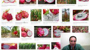 Ejder Meyvesi Nedir ? KPSS'de Zengin Sorusu - Google Trends