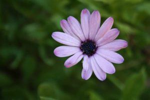 Çiçek Fotoğrafları