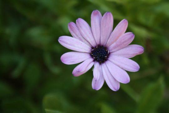 cicek fotograflari cicekler ucretsiz fotograf free stock flower photos (7)
