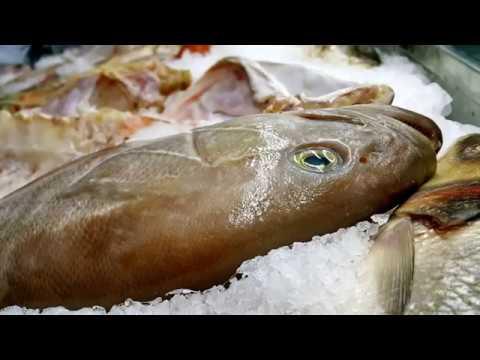 Balık Teşhir Dolabı Süslemesi Antalya Kaleiçi Yatlimanı Ekici Restaurant