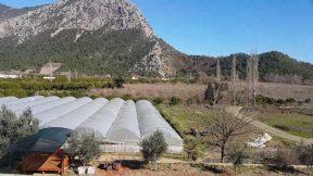 Adrasan Satılık Nar Bahçesi 3700 m2 - 700.000 TL. - 0532 567 7892