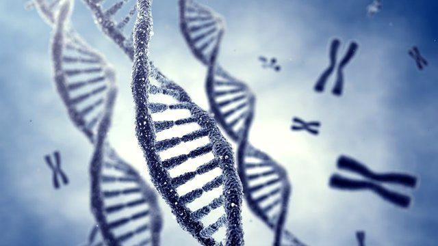 ozgur irade var midir genetik cevre deneyim etkileri baskisi ata sozleri 2