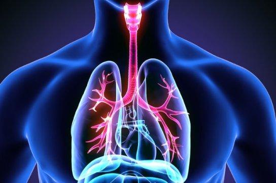 Sigara vücudu nasıl etkiler ve bıraktıktan sonra gün gün neler olur ?