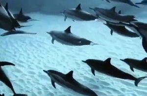 Yunus Balıkları ve berrak su altı - Bu video huzur veriyor