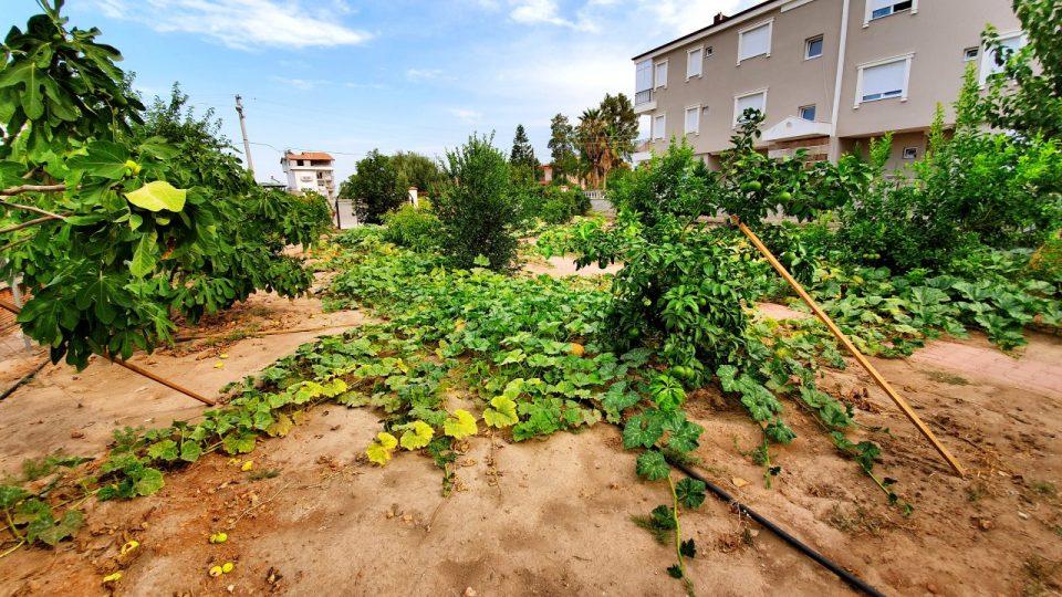 Bal Kabağı – Antalya Döşemealtı Hobi Bahçesi Muzaffer Aksoy_1
