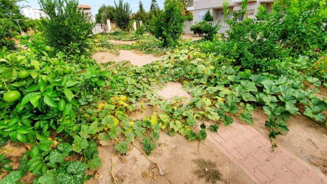 Bal Kabağı - Antalya Döşemealtı Hobi Bahçesi Muzaffer Aksoy_5
