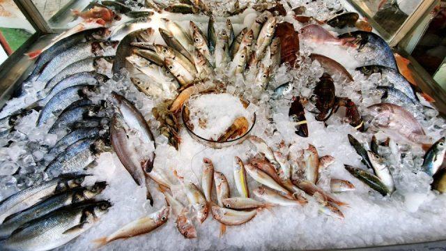 Yat Limanı Balık Restoranları - Ekici Restaurant Antalya balık dolabı dizaynı_1