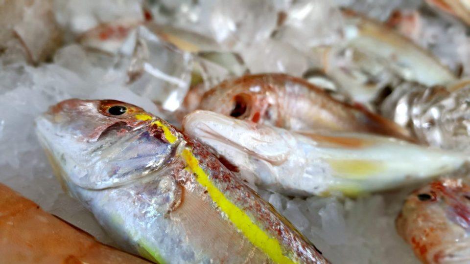 Yat Limanı Balık Restoranları – Ekici Restaurant Antalya balık dolabı dizaynı_7