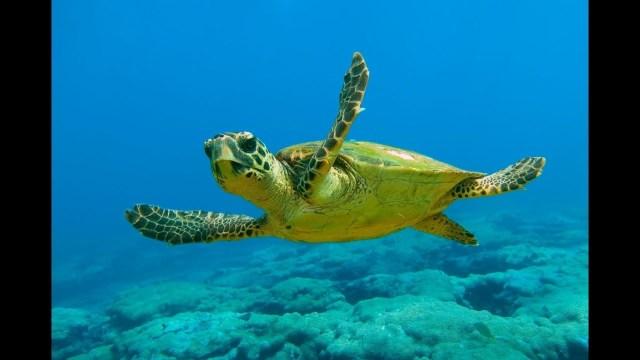 Ara Geçiş Fosilleri ve Türleri: Kaplumbağalar