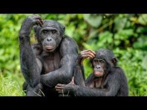 Evrimde yeni özellikler nasıl ortaya çıkar ?