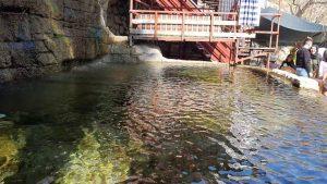 Havuz ve su sesi - Muhtarın Yeri Sakinler Gözleme Kahvaltı Evi Çakırlar Köy Kahvaltısı Antalya