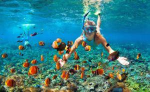 En iyi 10 sualtı manzarası ve dalış videosu