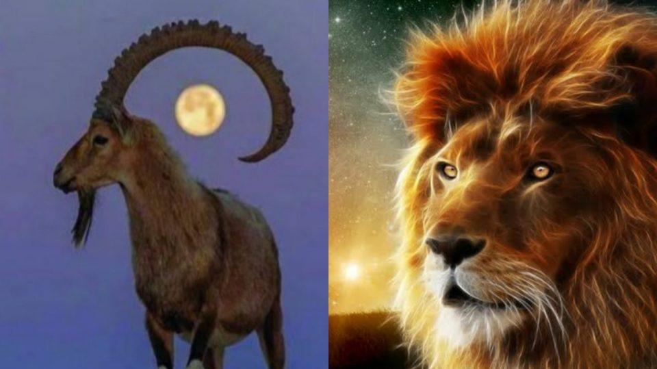 aslan ve teke öyküsü