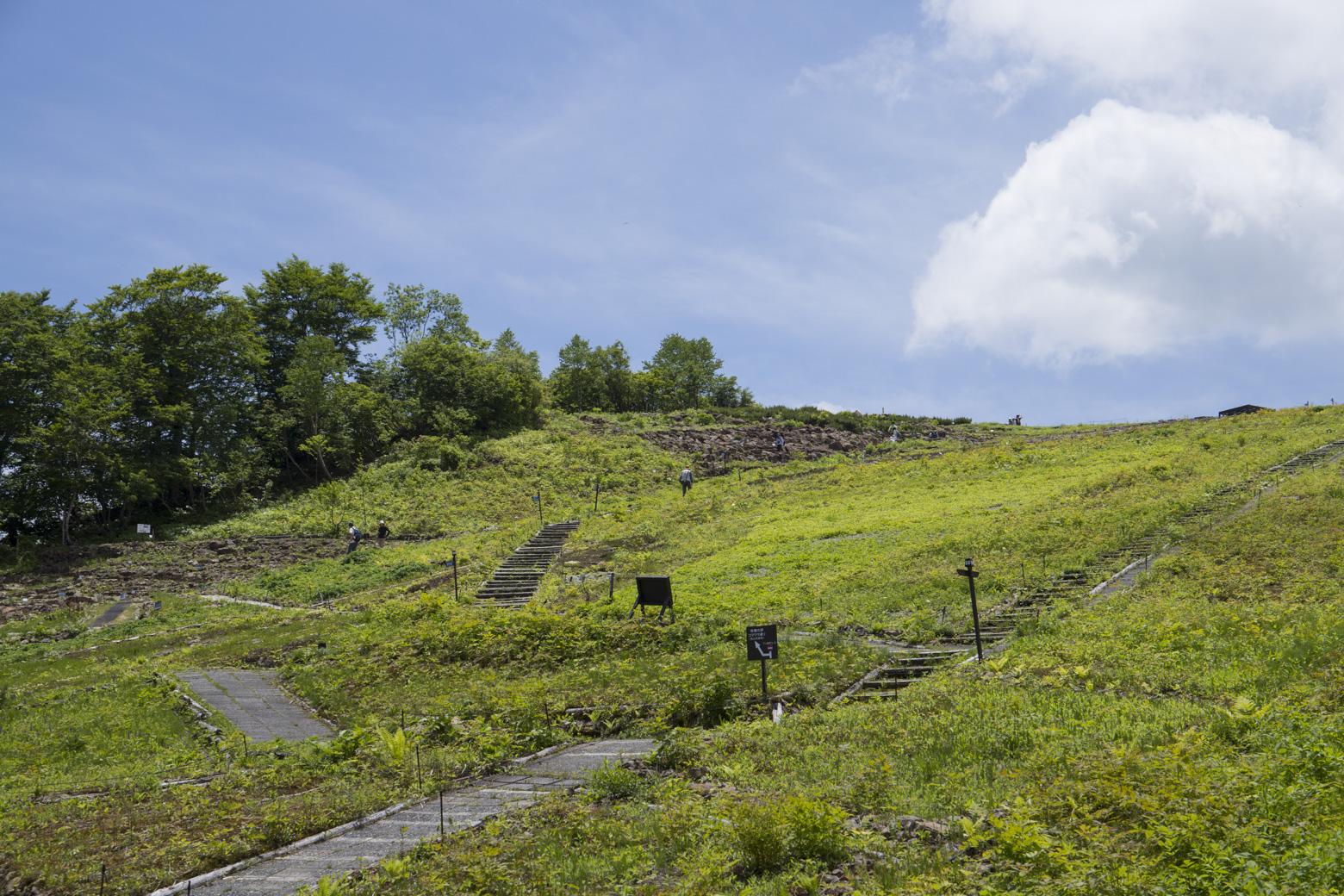 白馬五竜高山植物園はいつきても楽しめます