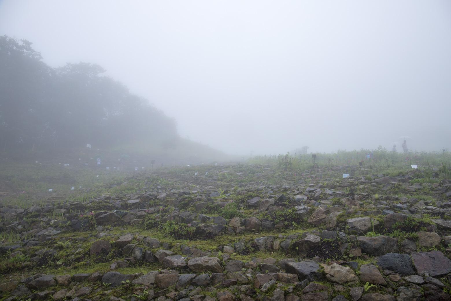 雨の日の白馬五竜高山植物園