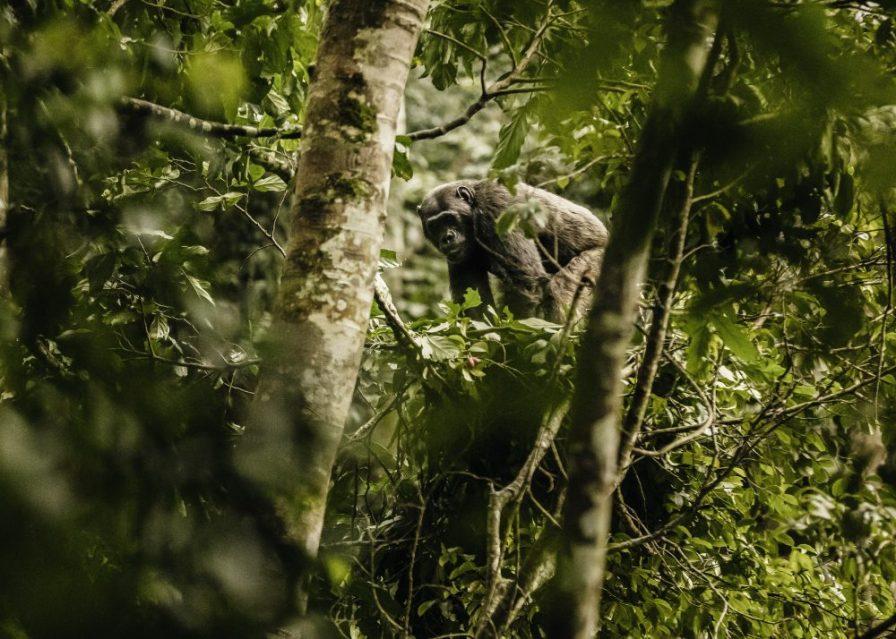 NH_OO_Activities_Chimpanzee_Trek_6587_MASTER