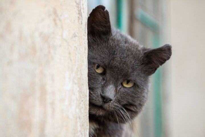 сериал «Чёрная кошка»