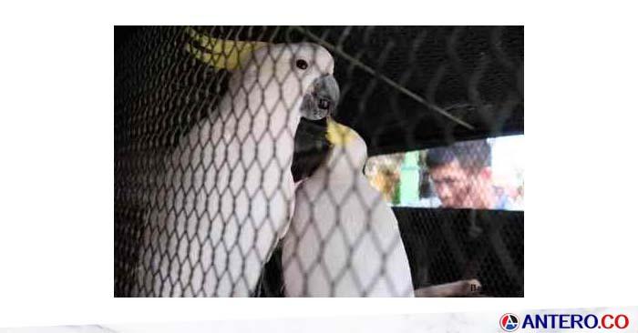 BKSDA Serang Terima Empat Ekor Burung Kakatua Langka