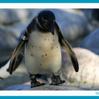 Welt-Pinguin-Tag | antetanni entdeckt Lesenswertes