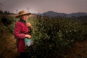 This woman has been a tea picker her entire life.