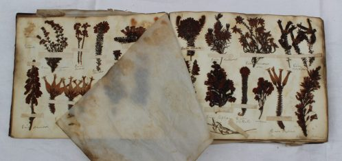 "An album of pressed floral and leaf specimen, titled to the inside cover ""Henry Dale, Herbarium, August 2nd 1836. Sold for £170 at Anthemion Auctions"