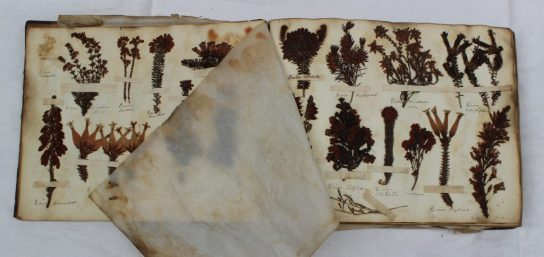 """An album of pressed floral and leaf specimen, titled to the inside cover """"Henry Dale, Herbarium, August 2nd 1836. Sold for £170 at Anthemion Auctions"""