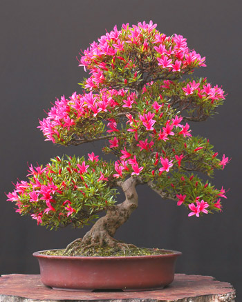 bonsai_flower